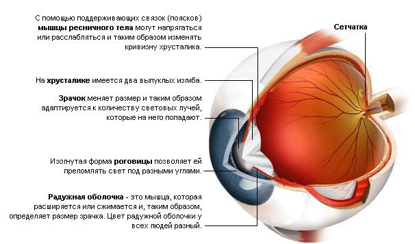 Комплексы упражнений для восстановления зрения при близорукости