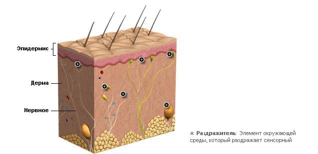 Мышечно суставный анализатор лечение суставов в санатории старая русса