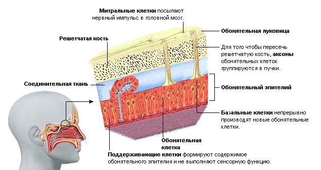 Мышечно - суставный анализатор лфк при повреждении коленного сустава реферат