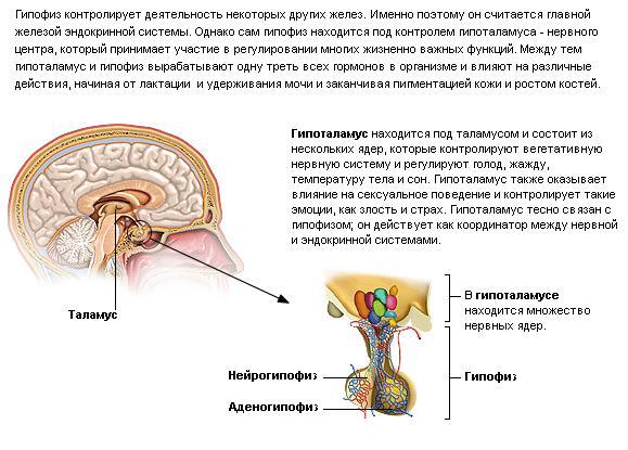 gormon-virabativaemiy-vo-vremya-zanyatiyami-seksa