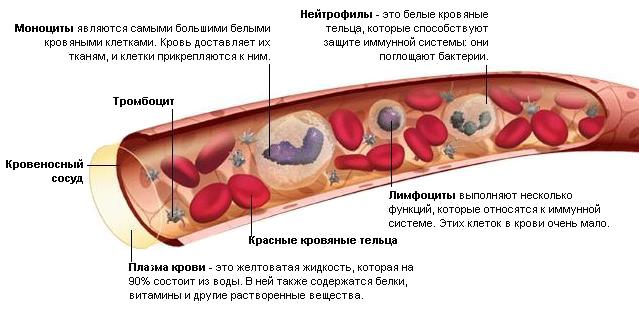 Поликлиника 45 москва войковская взрослая проезд
